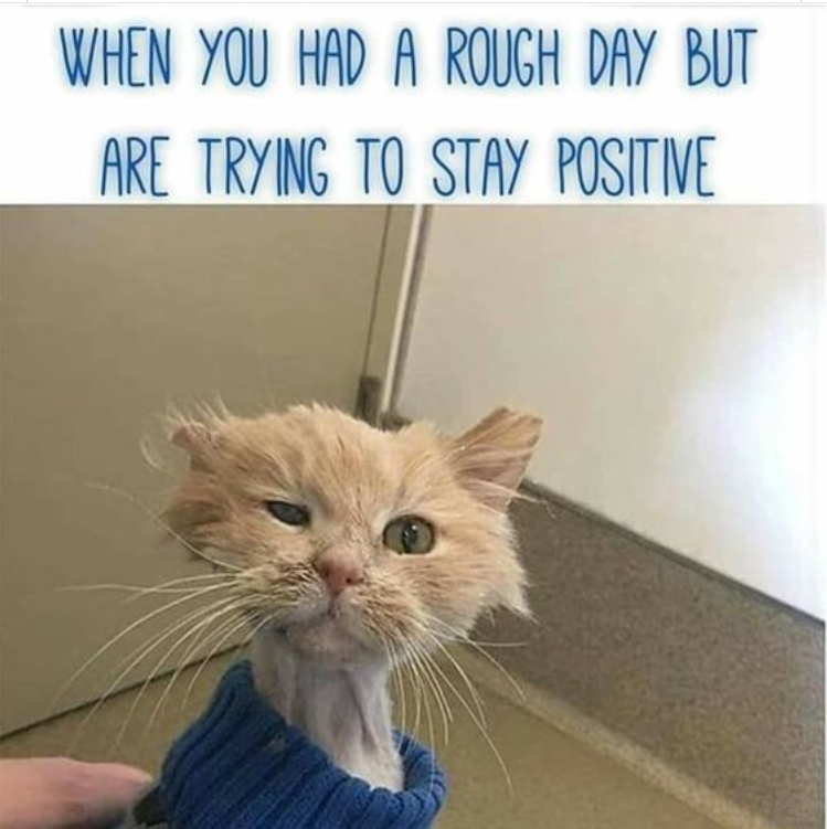 "rough looking kitty meme, ""When you had a rough day but are trying to stay positive"""