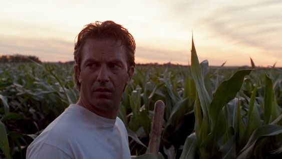 Field of Dreams cornfield